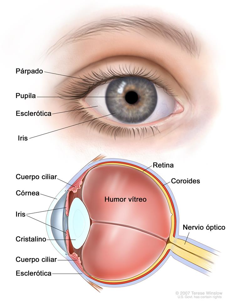 Información general sobre el retinoblastoma