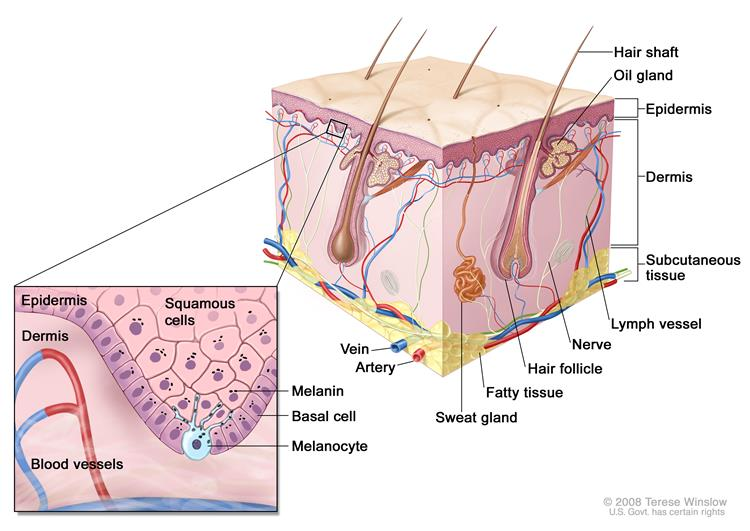 Melanoma is a disease in which malignant (cancer)