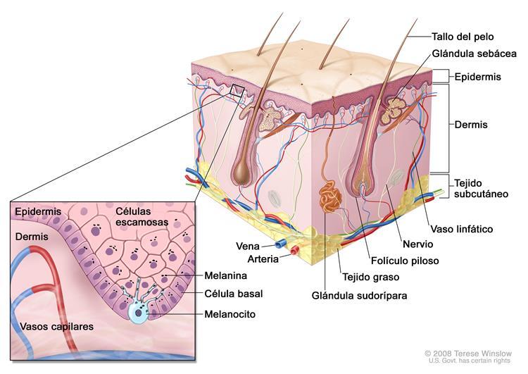 Información general sobre el melanoma