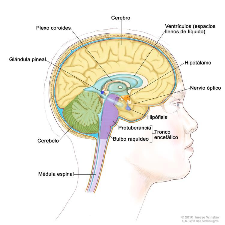 Información general sobre los tumores de hipófisis