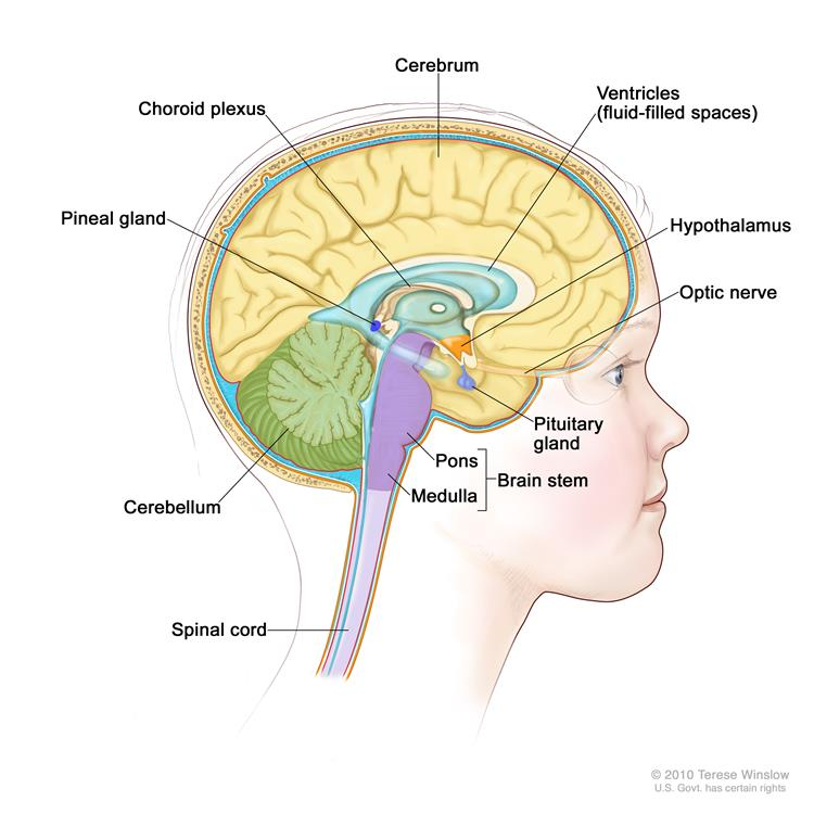 There Are Different Types Of Cns Embryonal Tumors