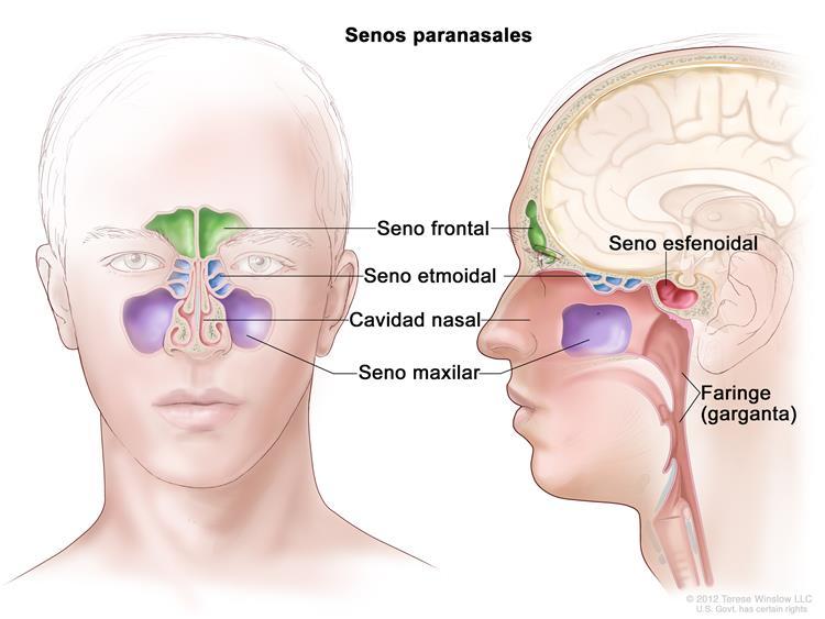 Papilloma nasal sintomas