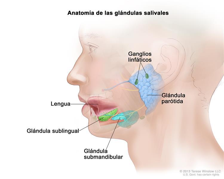 Información general sobre el cáncer de glándulas salivales