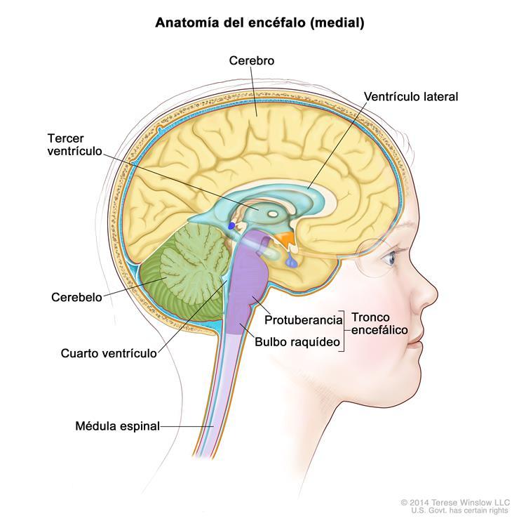 (cancerosas) en los tejidos del encéfalo y la médula espinal.